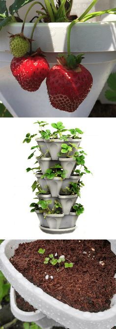 5 Tier Stackable Planter Amazon Home Decor, Gardening Gloves, Cool Tools, Lawn, How To Look Better, Floral Design, Planters, Fresh, Floral Patterns