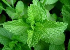7 afecțiuni care pot fi diminuate de magneziu și top 5 al surselor vegetale! Învață mai multe despre beneficiile și aportul corect de magneziu!