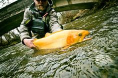 Palomino Trout (wow)