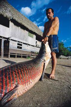The paiche - Peru: Saving El Dorado's freshwater giants, fish, #ditalu