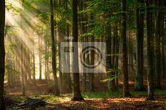 Papier peint arbres de la forêt d