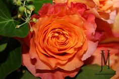 Roses Free Spirit, All Year-Orange/Coral flowers