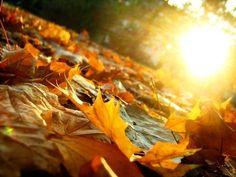 Glorious Autumn sun photography outdoors sun trees autumn leaves