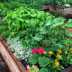 So this gorgeous raised bed teeming with healthy veggies and annual blooms from gardener extraordinaire is such an inspiration and reminder that Spring will be here before we know it 💚🙏💚🙏💚 . Raised Garden Beds, Raised Beds, Container Vegetables, Veggies, Backyard Vegetable Gardens, Annual Flowers, Family Garden, Growing Herbs, Edible Garden