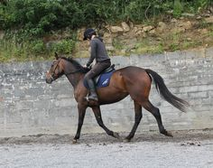 Hazel schooling in arena. #horseforsale https://www.facebook.com/CoopersHillLivery/videos/vb.304410449606132/902006149846556/?type=2&theater