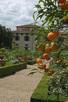 Villa Medici di Castello,near Florence province of Florence  Tuscany, Italy