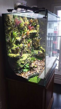 21 Best Aquascaping Design Ideas to Decor Your Aquarium - Tips Inside - homelovers Tree Frog Terrarium, Terrarium Tank, Gecko Terrarium, Aquarium Terrarium, Reptile Terrarium, Terrarium Plants, Planted Aquarium, Aquarium Fish, Tropical Terrariums