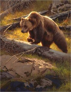 Grizzly bear painting by Greg Beecham