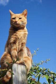 """""""If a cat spoke, it would say things like, 'Hey, I don't see the problem here'."""" - Roy Blount,Jr."""