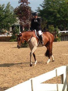 Large bleach spot on stallion Lorando B