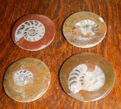 Genuine AMMONITE FOSSIL Cabochon - Your Choice of Stone - 300 Million Year Old Fossils - Gemstone Collection or Jewelry Making Supply