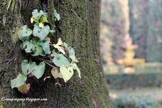 Giardini Giusti (VR) - violetta sull'albero