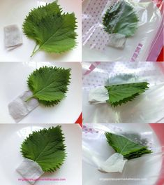 How to store shiso leaves