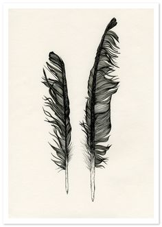 fallen feathers ~ artist Claire Scully #journal #art #feather #pen_ink #drawing #illustration