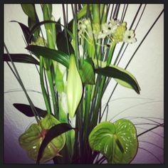 Great flowers!