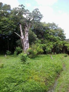 Jardim Botânico. João Pessoa Paraíba - Brasil