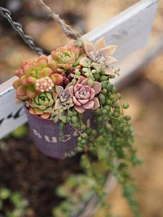 Love the colors - succulent
