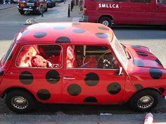 Mini lady bug