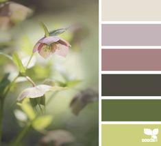 flora tones, by design seeds Colour Pallette, Color Palate, Colour Schemes, Color Patterns, Color Combos, Design Seeds, Paleta Pantone, Colour Board, Color Swatches