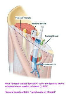 """Femoral sheath & canal... ( Correction : From Lateral to Medial ) ( """"Nerve to Pectineus"""" & """"Femoral branch of Genitofemoral N. are content of Femoral triangle ) ( Lymphatics is """" Deep inguinal lymph node """" )"""