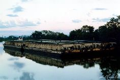 Ziriguidum Pantanal, outra odisseia ambiental. À luta!Pantanal, #sospantanal, Mato Grosso, Brasil, river, Paraguai, santuary, Brazil, enviroment, Mato Grosso do Sul, Bolívia, Bacia do Prata, transgênico, pesca,