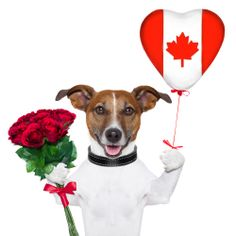 Check out www.ValentinesGiftsCanada.ca for great gift ideas for 2014 for him or her with delivery to most areas in Canada from namebrand stores and florists