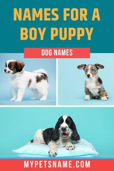 Whether your male dog has a strong, fierce temperament, or a calm, chilled out one, we have a broad range of boy names to suit every kind. So take a look and tell us which one is your favorite. Cute Male Dog Names, Boy Puppy Names, Cute Names, Pet Dogs, Dogs And Puppies, Popular Boy Names, Famous Historical Figures, Marley And Me, Boy M