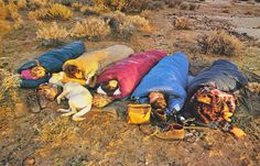 theroamer: dogs as pillows,  From The North Face catalog, c. 1970-80.