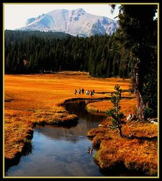California's Lassen Volcanic National Park, Meadow in Fall, by moonjazz