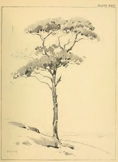 Drawing Foliage with Pencils — This is an article from an old vintage book about drawing lessons & tutorials for how to draw foliage, shrubs, and trees.