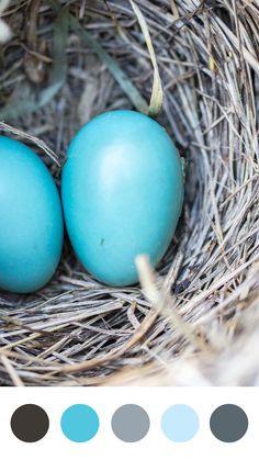 Nest Eggs Color Palette | Emma Englishby | Electric blue and light grey color palette