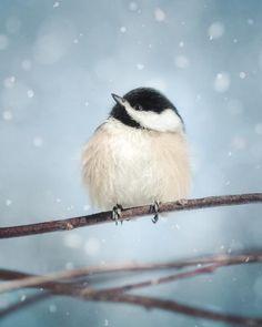 Winter Art, Winter Decor, Bird Art, Chickadee, Winter Artwork, Snow Photo, Nature Photography, Winter Bird Print, 5x7 8x10 11x14 16x20 Print...