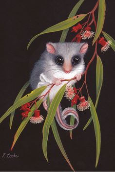 'Australian Feathertail Glider On Eucalyptus Blossom', by Lyn Cooke www.artpublishing.com.au  www.lyncooke.com