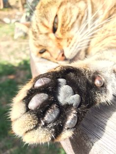 Little paw :)