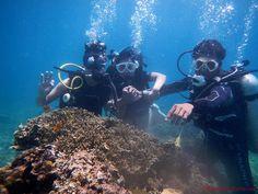 Discover Scuba Diving with Friends Climbers, Scuba Diving, Romance, Adventure, Friends, Diving, Romance Film, Amigos, Romances