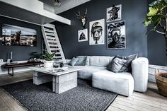 Studio apartment with dark wall colour and loft bed
