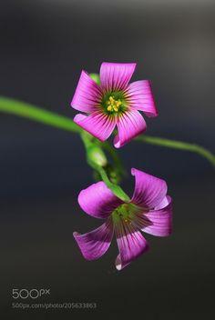 Wild Flowers by NecdetYasar