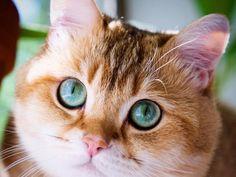 Hosico le chat star d'Instagram