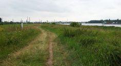Bei Köln-Worringen am Rhein: Grüne Wiesen und Industrie - Foto: S. Hopp