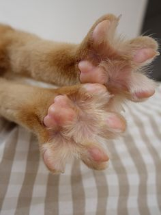 Kitty tootsies waiting for a manicure! I love to pet kitty feet. They are so adorable.