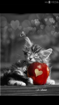 Fantastic Beautiful cats info are available on our web pages. Cute Kittens, Kittens And Puppies, Cats And Kittens, I Love Cats, Crazy Cats, Cool Cats, Cute Baby Animals, Animals And Pets, Funny Animals