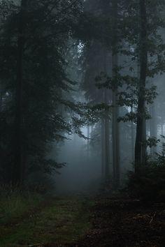 Тёмный лес, мрачный, атмосферный, страшный, сказочный, чем дальше в лес...