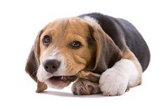 En #PiensoPet podrás encontrar el #pienso que más se adapta a tu perro. Elige entre todas las marcas que tenemos disponibles.