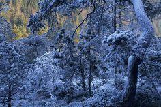 Tourbière dans les Vosges de Christophe Sidamon-Pesson