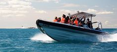 The Big Duck - Boat tours featuring whale watching, dolphin watching and seal watching - Victor Harbor