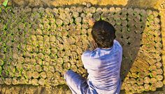 Un giardiniere al lavoro a Lahore, Pakistan