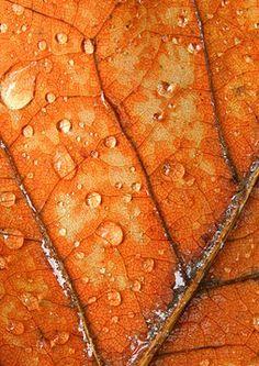 ❧ Couleur : Orange et brun ❧