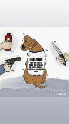 Animals And Pets, Cute Animals, Moral, Good Vibes, Portuguese, Humor, Memes, Life, Pets