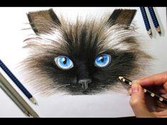 Drawing Subscribers' Pets #2 ❤ Zida, Ragdoll Cat from Holland - Speed Draw | Jasmina Susak - YouTube