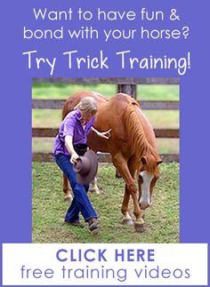 Horse Tricks 101